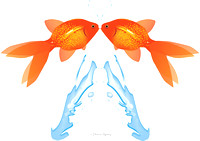 Two Goldfish leaping out of water,